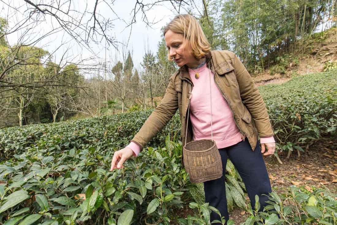 Woman wears layered clothing in tea plantation in China