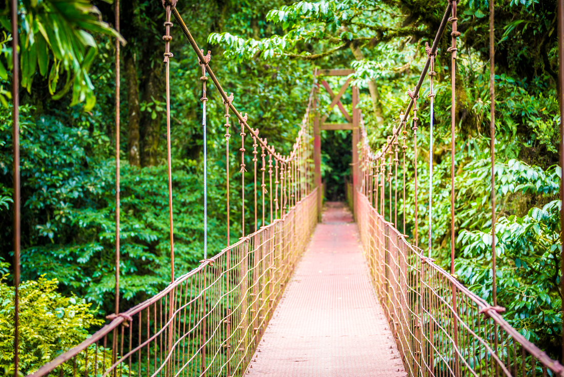 Suspension bridge in the Montverde Cloud Forest