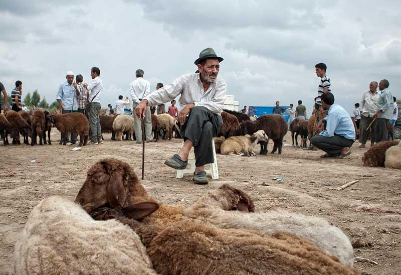 Iranian sheep farmer