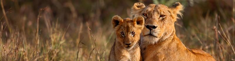 Lioness and her cub in Kenya