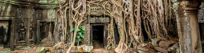 Overgrown temple in the Angkor Wat complex