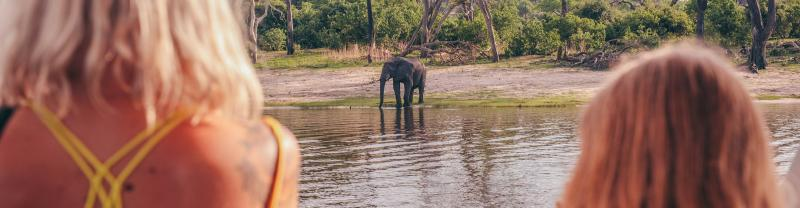 Watch elephants on Safari with Geckos Adventures