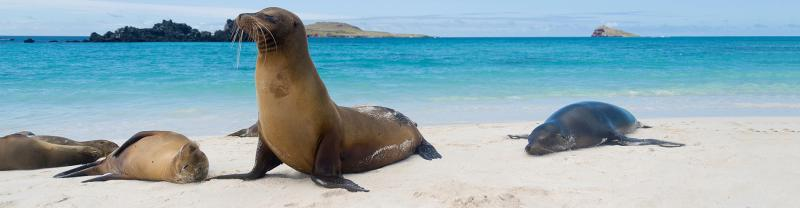 Sea lions on beach, Galapagos Islands