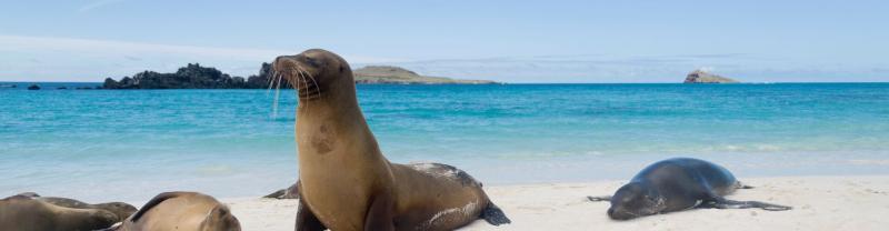 galapagos_content-seal