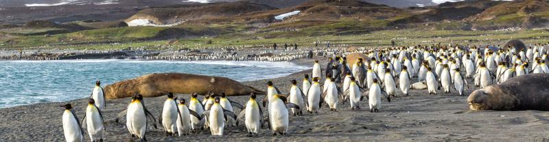 Penguin colony on the Falkland islands
