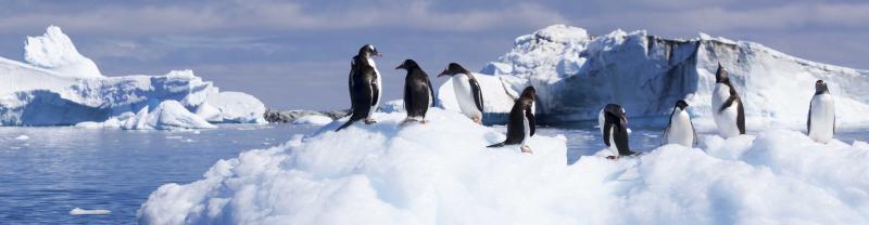 Penguins rest on iceberg in Antarctica