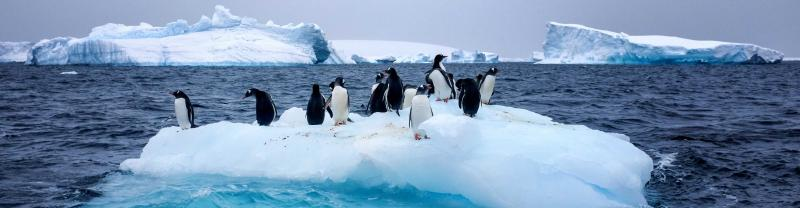 Penguins rest on iceberg in Antarctica