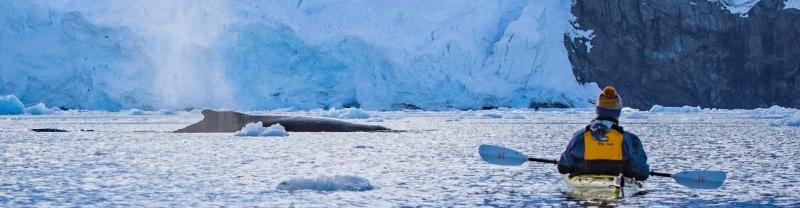 Kayaker in Antarctica close to whale as it breaches near glacier