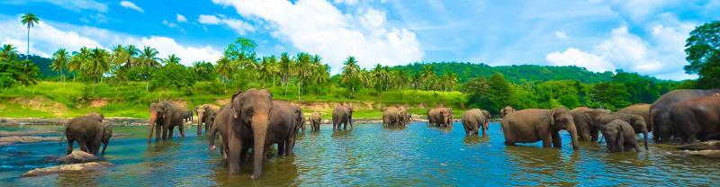 Elephants bathing in Udawalawe National Park, Sri Lanka