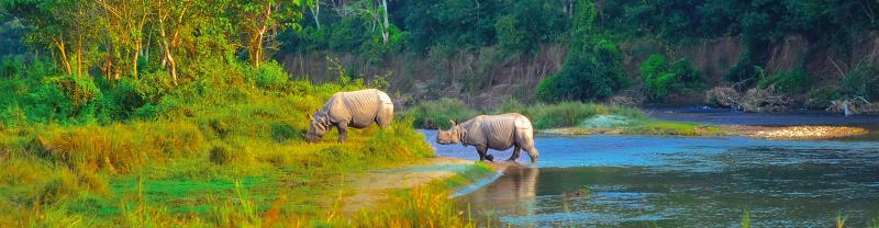 Nepal Chitwan rhinos