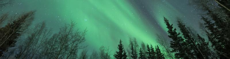 SSFA - Northern Lights Alaska Forest Banner - 1920x500