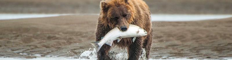 Alaska Adventure with Intrepid Travel