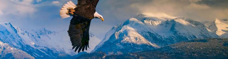 Alaska's Kenai Peninsular with Intrepid Travel