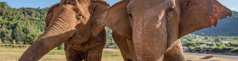 Chiang Mai & Elephant experience with Intrepid Travel