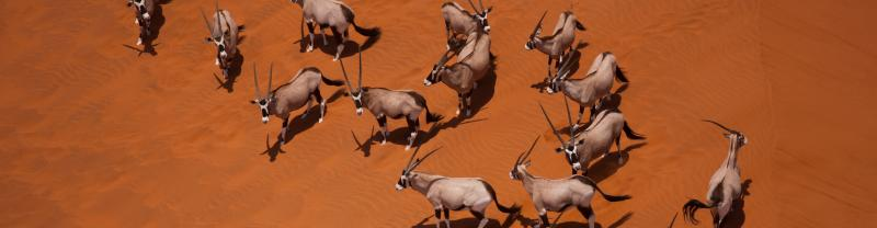 namibia_dunes_oryx_desert_banner