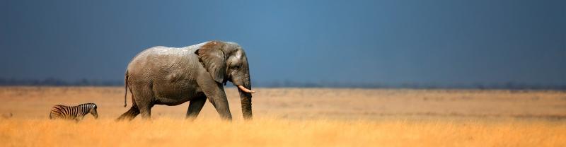 namibia_etosha-national-park_banner