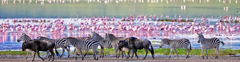 Zebras and flamingos flock to Ngorongoro crater, Tanzania