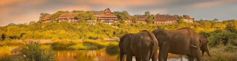 Elephants outside of the Victoria Falls Safari Lodge accommodation during dusk