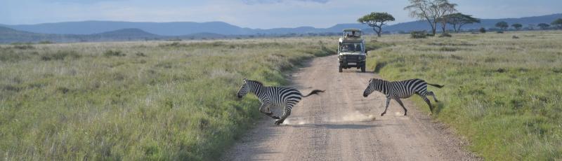 Tanzania - Serengeti safari trip