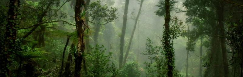 Jungle in Borneo