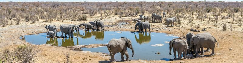 A herd of elephants at a watering-hole in South Africa