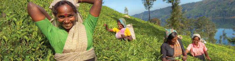 sri lanka tea pickers women smile