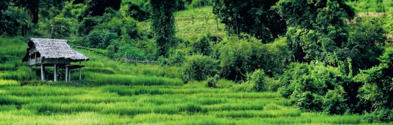 thailand hilltribe trek hike walk forest jungle
