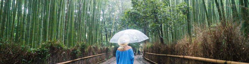 Traveller walks through arashoiyama bamboo forest, Kyoto