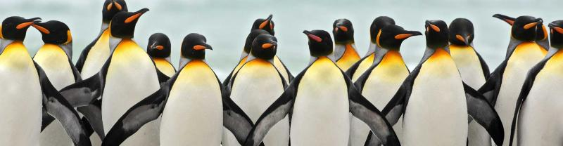 Group of penguins huddle in Antarctica