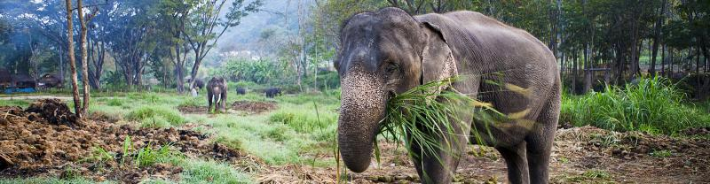 Elephant welfare and your travels