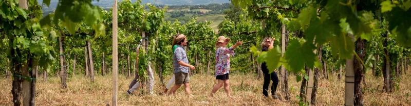 Travellers wander through the vineyards of Tuscany