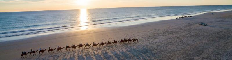 Camels saunder along Cable Beach in Broome, Western Australia