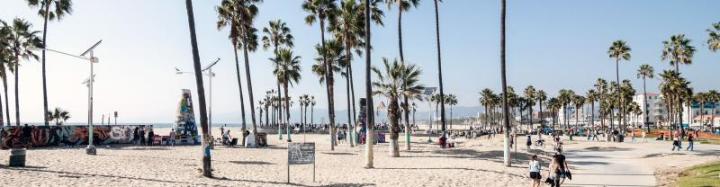 Palm trees at Venice beach during in Los Angeles, California