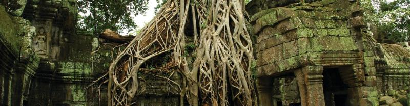 Ta Prohm temple in Cambodia covered in vines