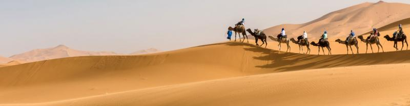 Travellers ride camels through the sahara desert, morocco