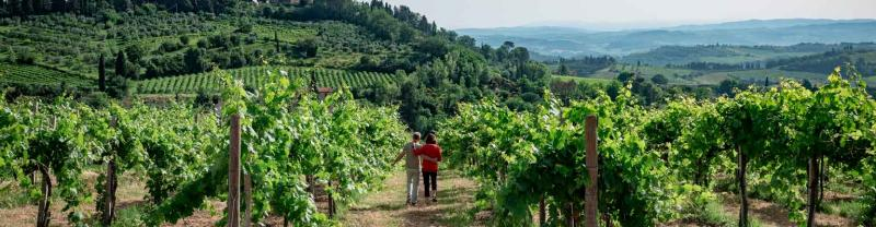 Two travellers wander through the vineyards of Tuscany