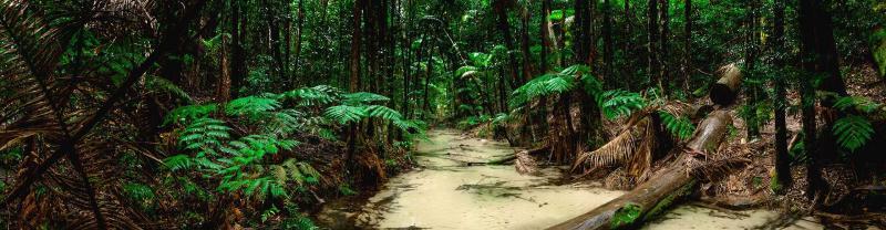 A rainforest on Fraser Island
