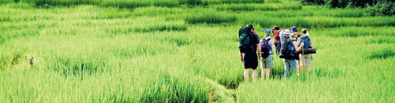People trekking through long grass