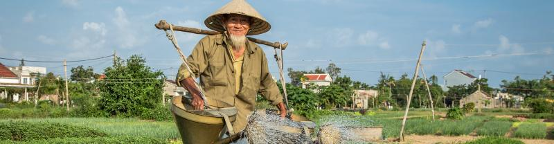 Elderly farmer watering vegetables, Hue, Vietnam