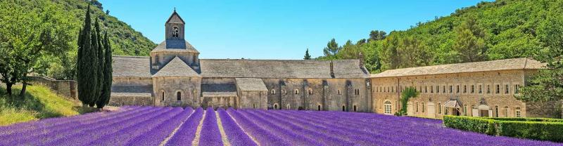 Abbey of Senanque and blooming rows lavender flowers in Provence, France