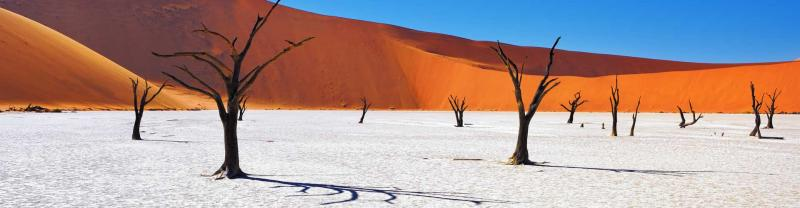 The dead trees of the Salt pan of Sossusvlei,Namibia