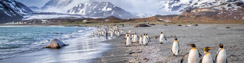 Penguins waddle along beach in the Falkland Islands