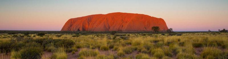 Uluru in golden grass field at sunset