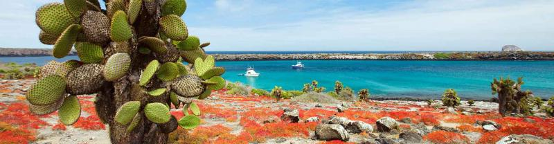 Cactus in front of sea on colourful Galapagos Islands