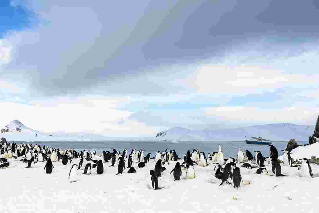 Antarctica tours travel intrepid travel us for Can i visit antarctica