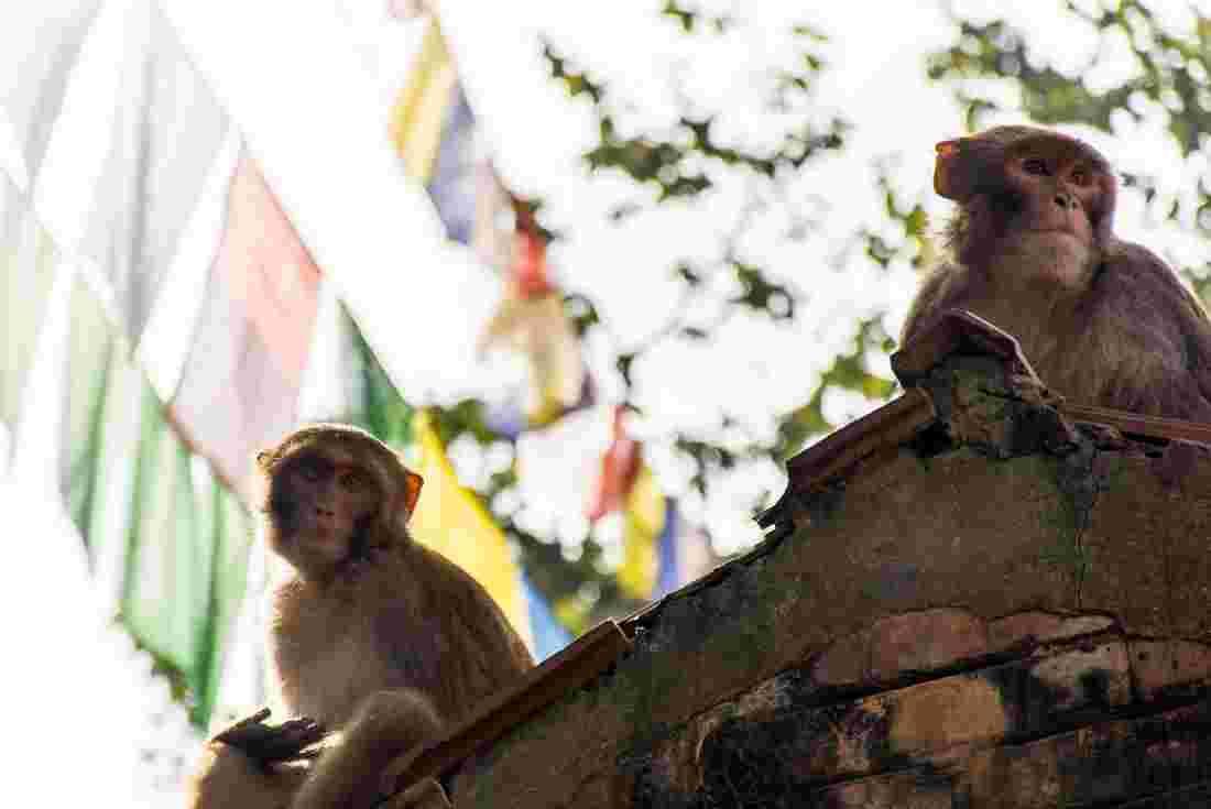 Nepal & Bhutan Journey | Intrepid Travel