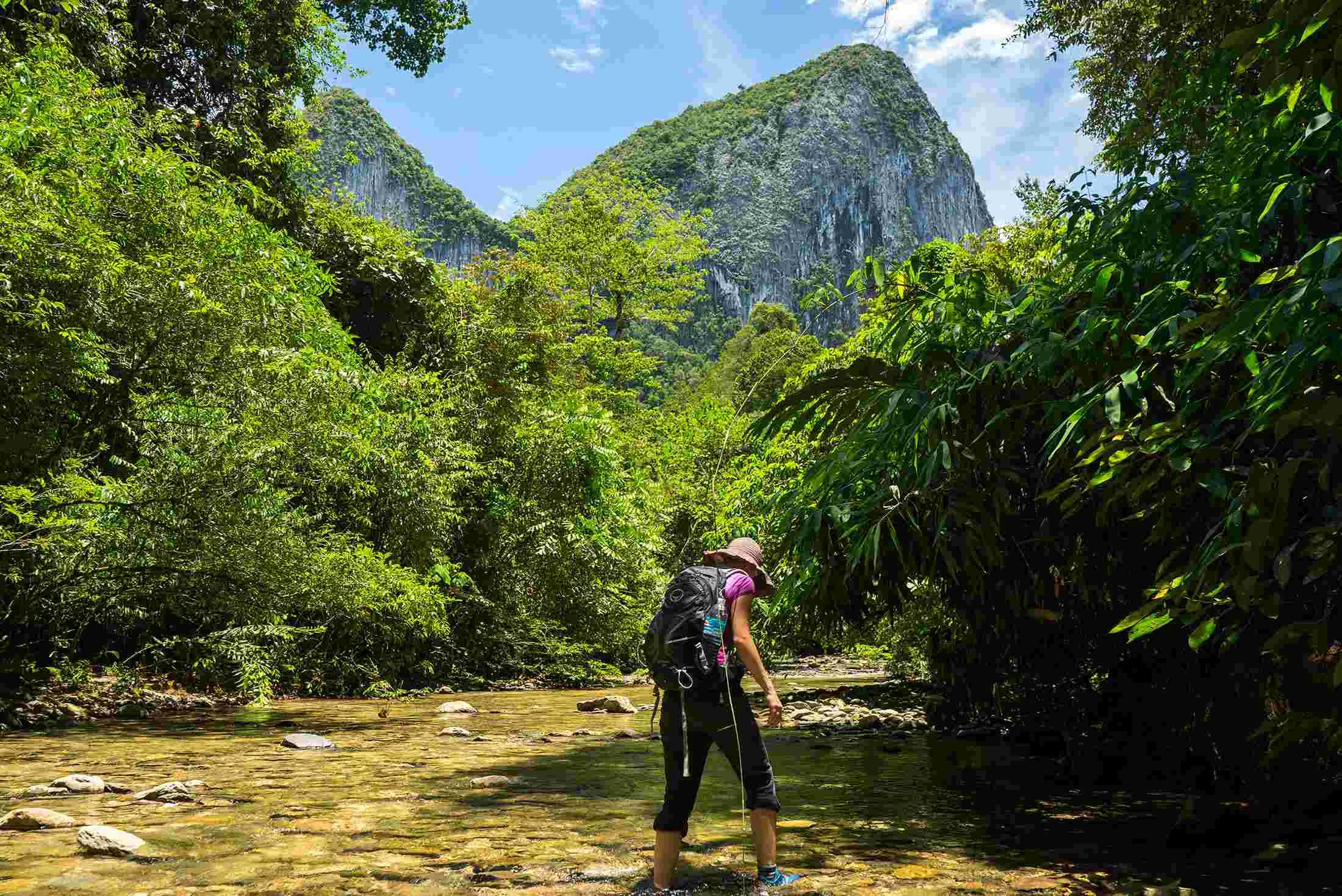 Sarawak Rainforest World Music Festival | Intrepid Travel