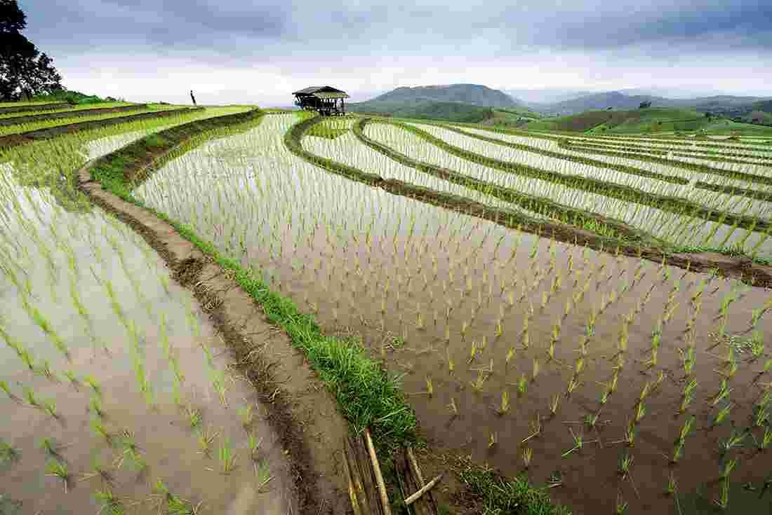539b3659d A rice terrace landscape in Chiang Mai, Thailand
