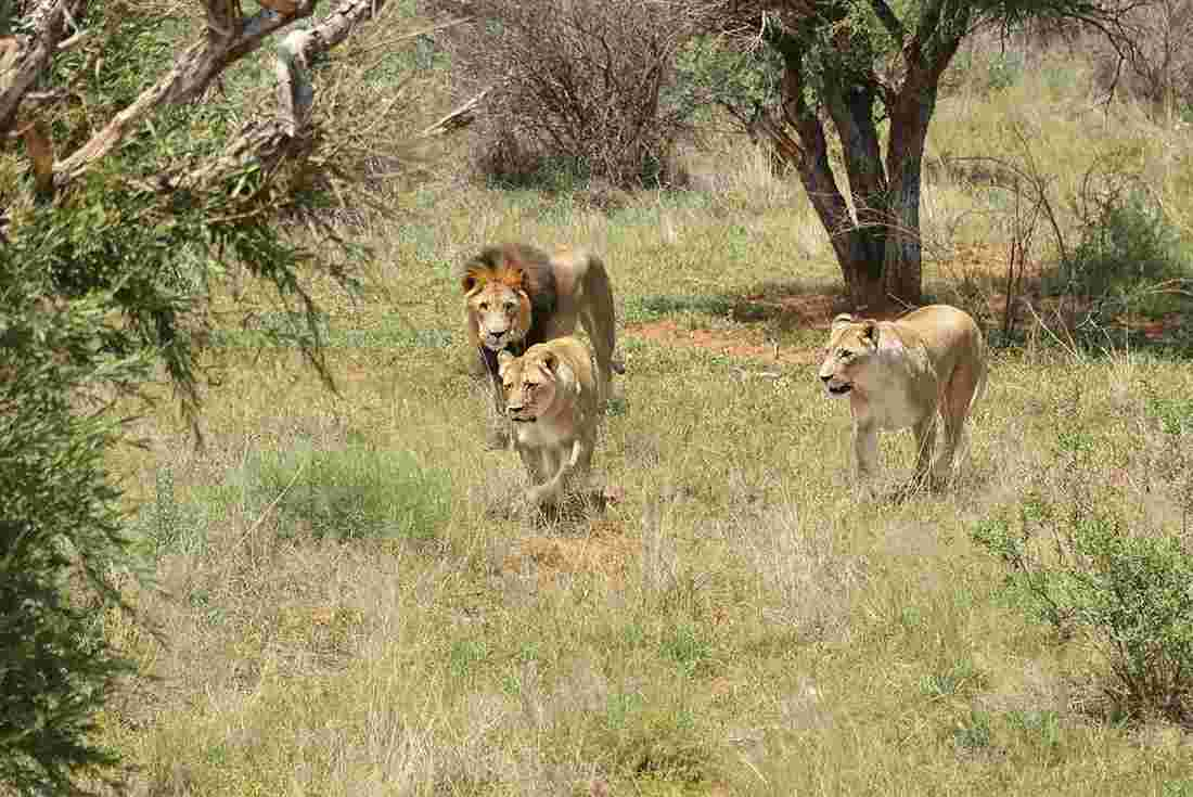 South Africa Kruger Walking Safari Intrepid Travel Us
