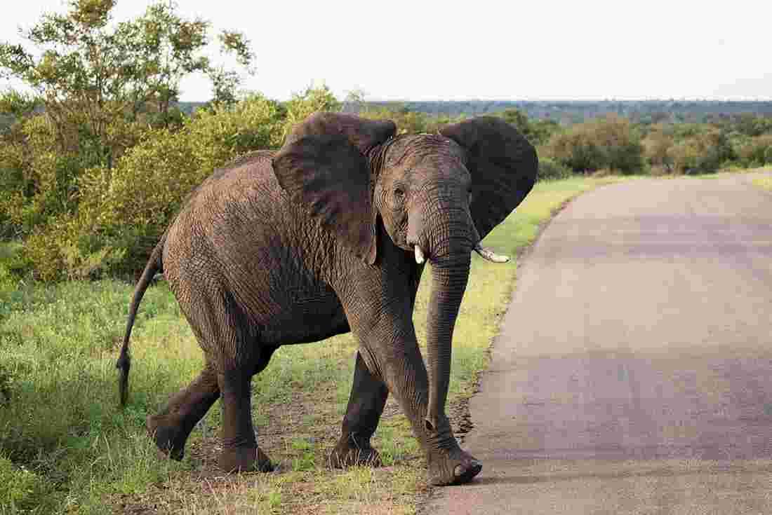 Vic Falls to Kruger | Intrepid Travel
